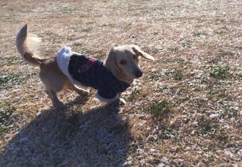 犬生初の雪.jpg